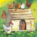 Přání Chicken coop