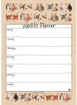 Kalendář plánovací celoroční - Charismatic cats